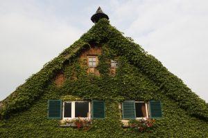 Haus mieten