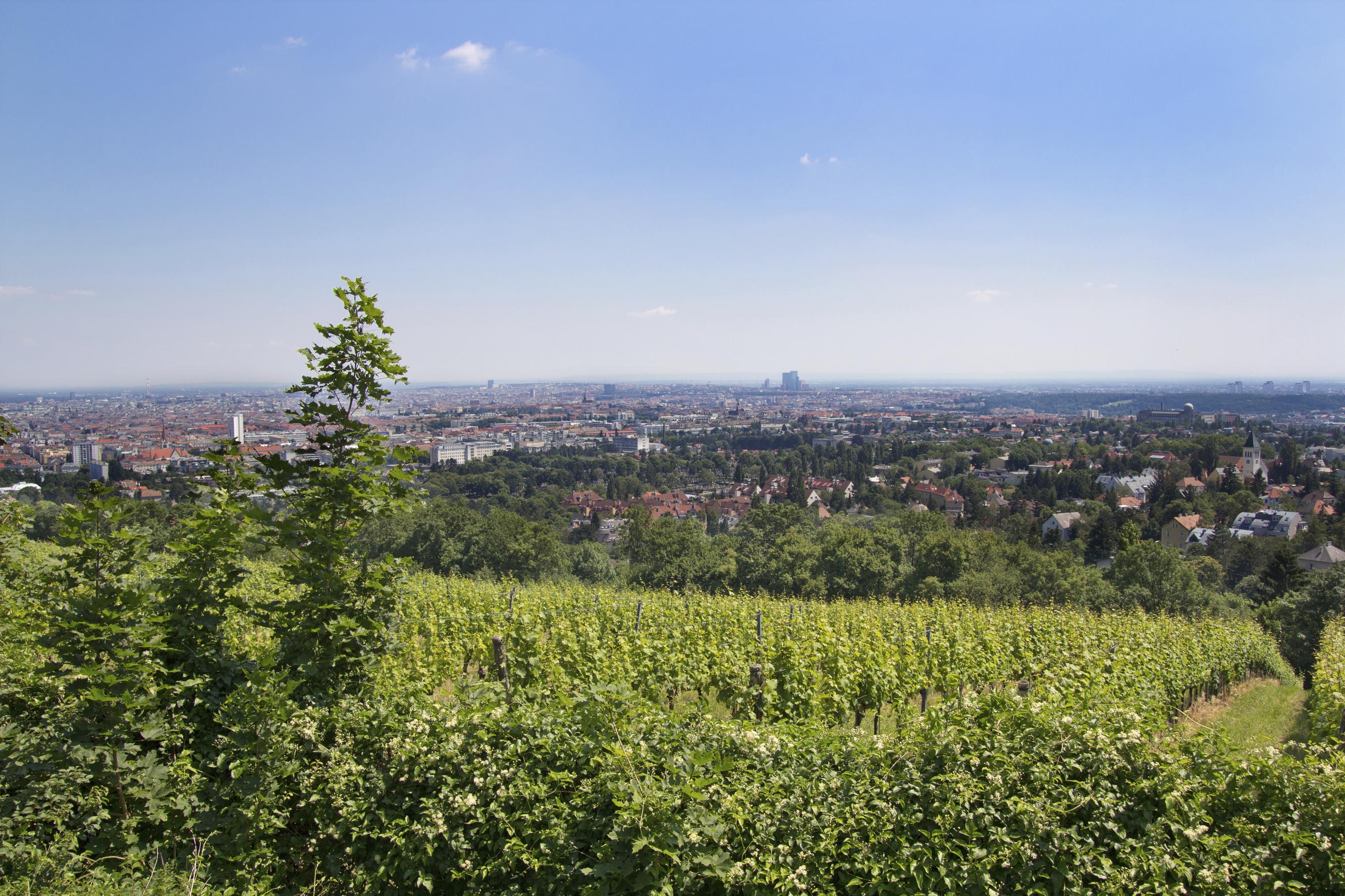 Single wohnungen wien mieten ▷Die Top Wohnungen in Wien finden,